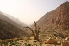 Blick in den Canyon in Dana
