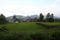 Blick über Reisfelder mit traditionellen Tongkonan im Hintergrund