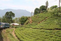 Blick auf die wunderschönen Teeplantagen
