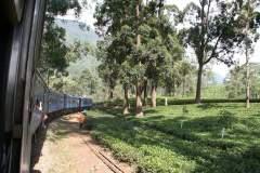 Fahrt durch Eukalyptuswälder
